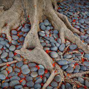 Fallen  by John Edwin May - Nature Up Close Trees & Bushes ( blooms, roots, travel, rocks, key west_fl )