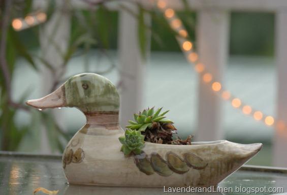 Duck - Rain