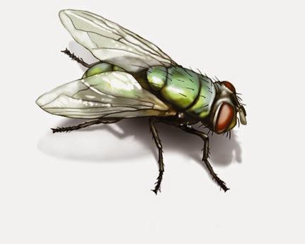 green-bottle-fly-illustration_1500x1200