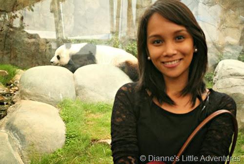 hong kong, ocean park, family, love, cute, selfie, panda, giant panda, giant panda adventure