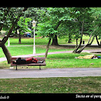 Siesta en parque