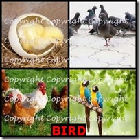 BIRD- 4 Pics 1 Word Answers 3 Letters