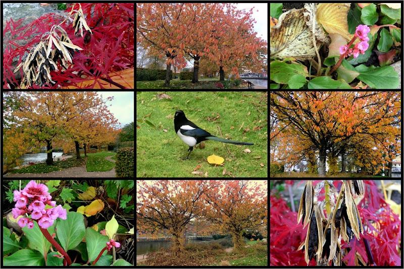 2011-10-25 autumn, town park