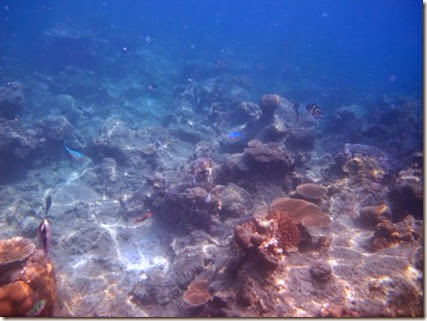 pemandangan alam bawah laut karimunjawa