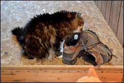 cats love boots