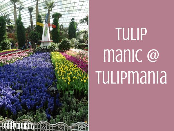 Tulip Manic  Tulipmania