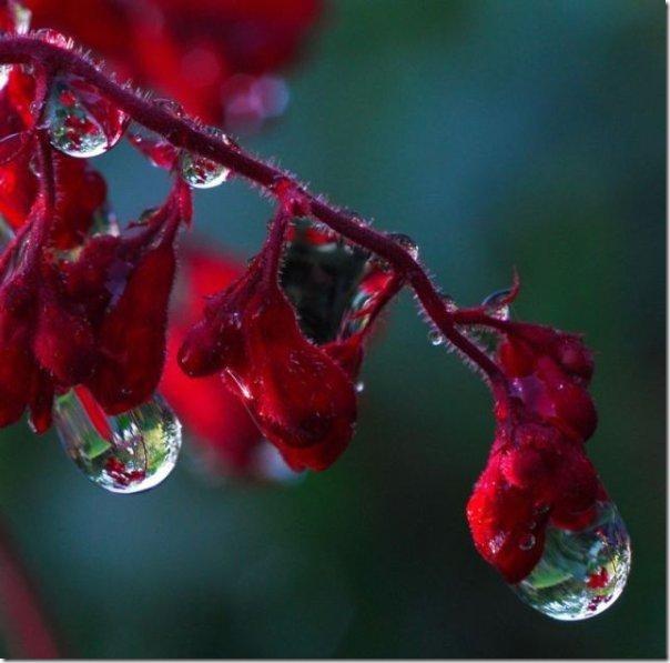 gota de agua (3)