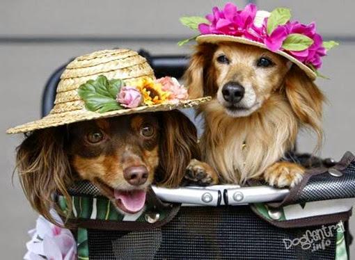 Две собаки в шляпках