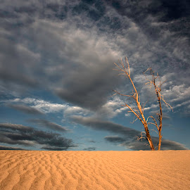 by Larry Rogers - Landscapes Deserts