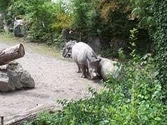 2011.08.07-028 rhinocéros
