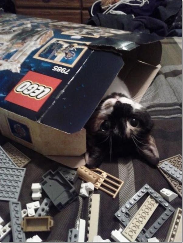 Gatos Felizes (4)