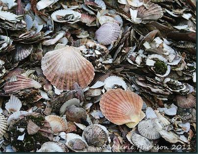 14-shells