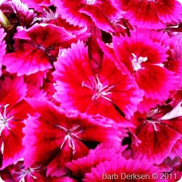 June 14 flowers4
