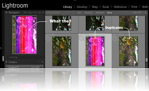 Example glitch with lightroom rendering