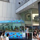 the outside Sony Aquarium in Ginza, Tokyo, Japan
