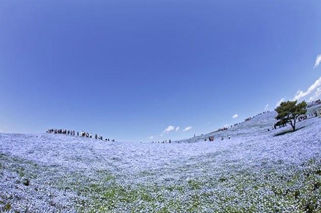 tapete de flores no japao