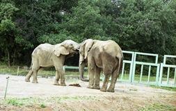 2001.09.05-148.09 éléphants