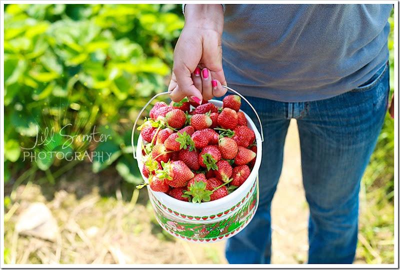 strawberryfields-5022