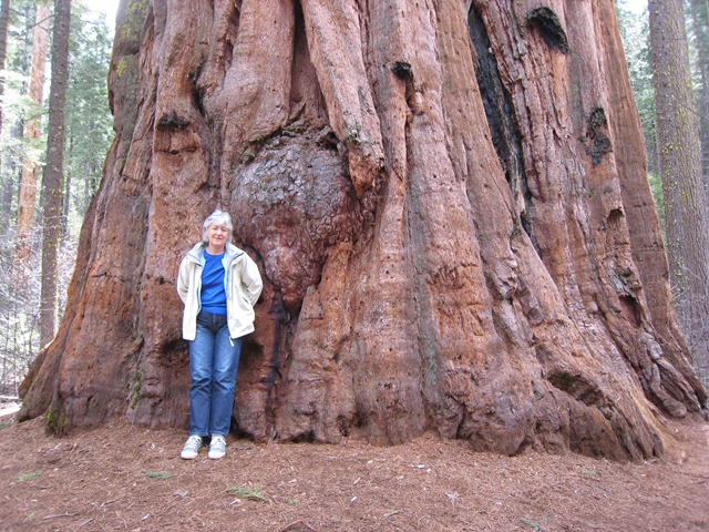 sue with sequoias