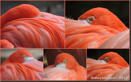 flamingo collage3