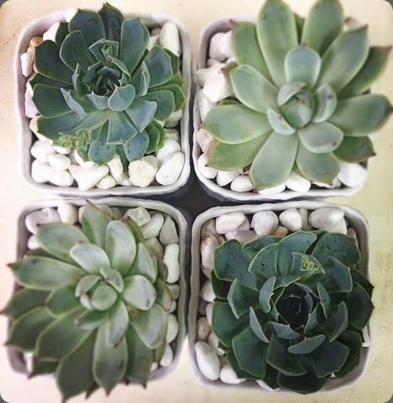 succulents botanica 10351767_10152093127776657_5381870656256141496_n