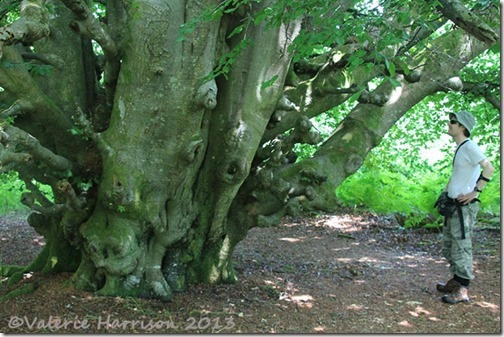 6-big-tree