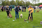 20100513-Bullmastiff-Clubmatch_30855.jpg