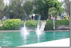 Bahamas12Meacham 475