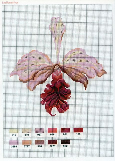 [flor-ponto-cruz-grafico-orquidea%255B3%255D.jpg]
