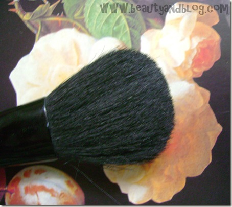Vega Blush Brush Review