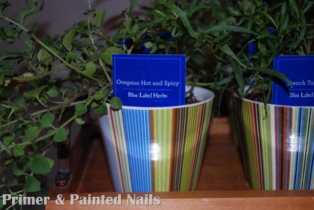 Dollar Store Pots 7 - Primer & Painted Nails