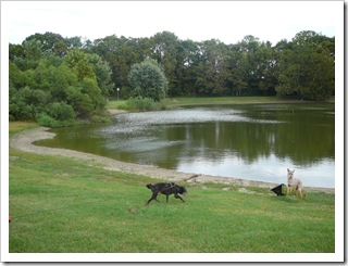 Blackie checking out the pond at Sugar Creek