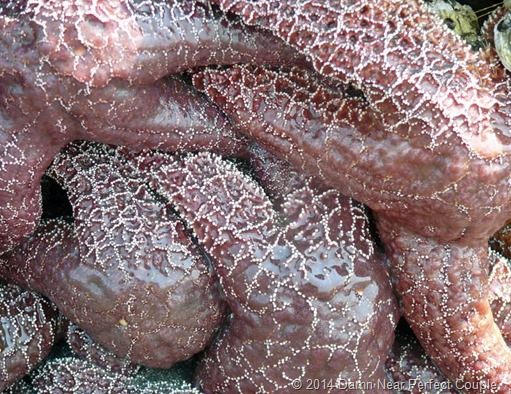 Sea Star Closeup