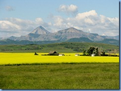 1234 Alberta Hwy 6 South - mountains & canola field
