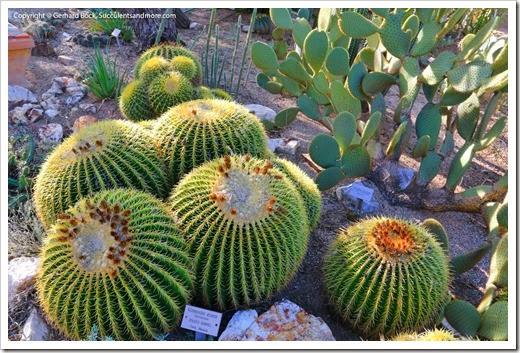 131203_TucsonBotanicalGarden_116