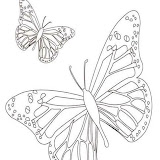 dibujo-mariposa-2.jpg