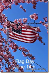 1-Flagday