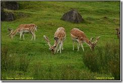 Bradgate Park D300s  08-07-2012 12-56-055