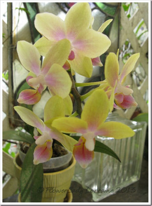 03-14-unkn-bday-orchid