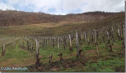 Viñedos del Arradoy - Ispoure