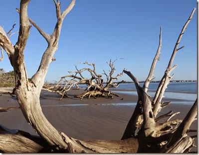 ga_eoy_jekyll_driftwood_beach1