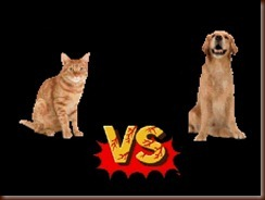 ! dog vs cat
