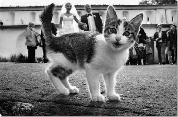 perfect-wedding-photo-10