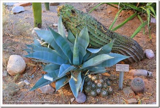 131203_TucsonBotanicalGarden_112