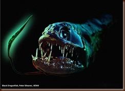 a60_Dragonfish