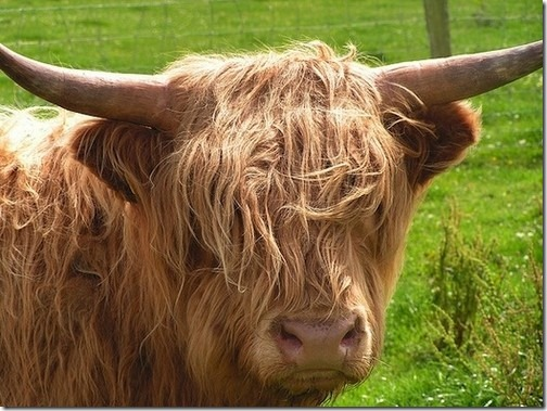 awesome-animal-haircuts9