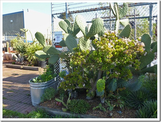 120208_CactusJungle_52