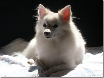 vaccino leishmaniosi canina