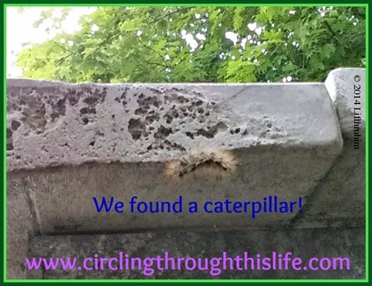 Caterpillar hiding under a picnic table