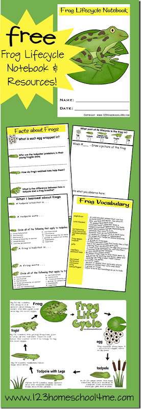 FREE Printable Frog Lifecycle Notebook and Worksheets #science #homeschooling